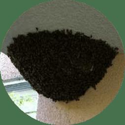 Bee Hive Exterminator