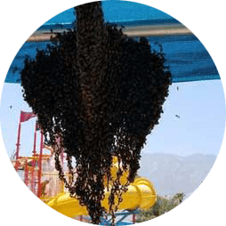 Bee Nest Removal