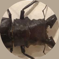 pest control bug removal