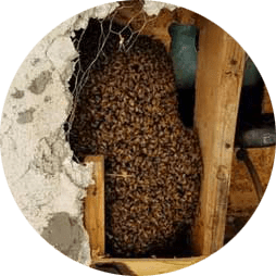 pest control bee removal