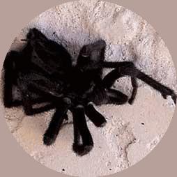 palm springs, exterminator