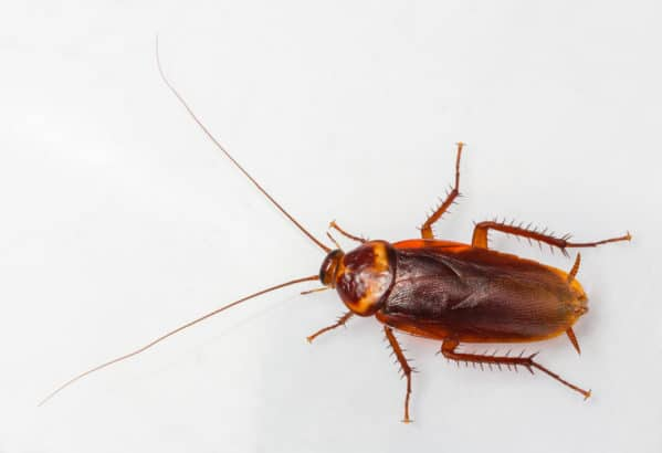 Roach Control Palm Springs