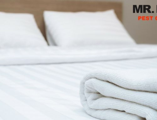 Having Issues with Bed Bugs in the Palm Desert Area? Mr. Beez is Here to Help!
