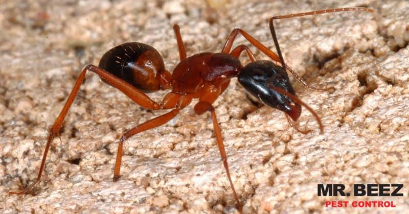 Common Pests - Mr. Beez Pest Control