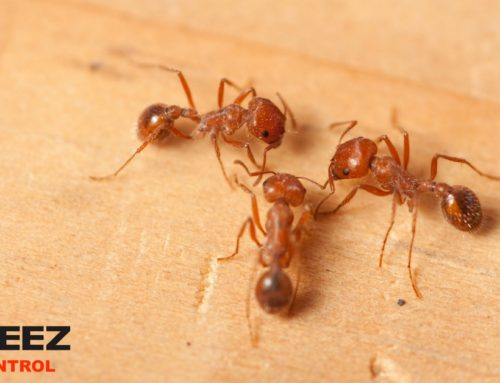 Prevent Fire Ants In Your Desert Home With These Tips