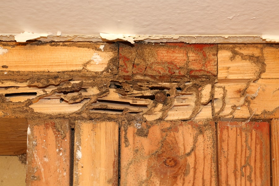 Termite Removal Service In The Palm Springs Area
